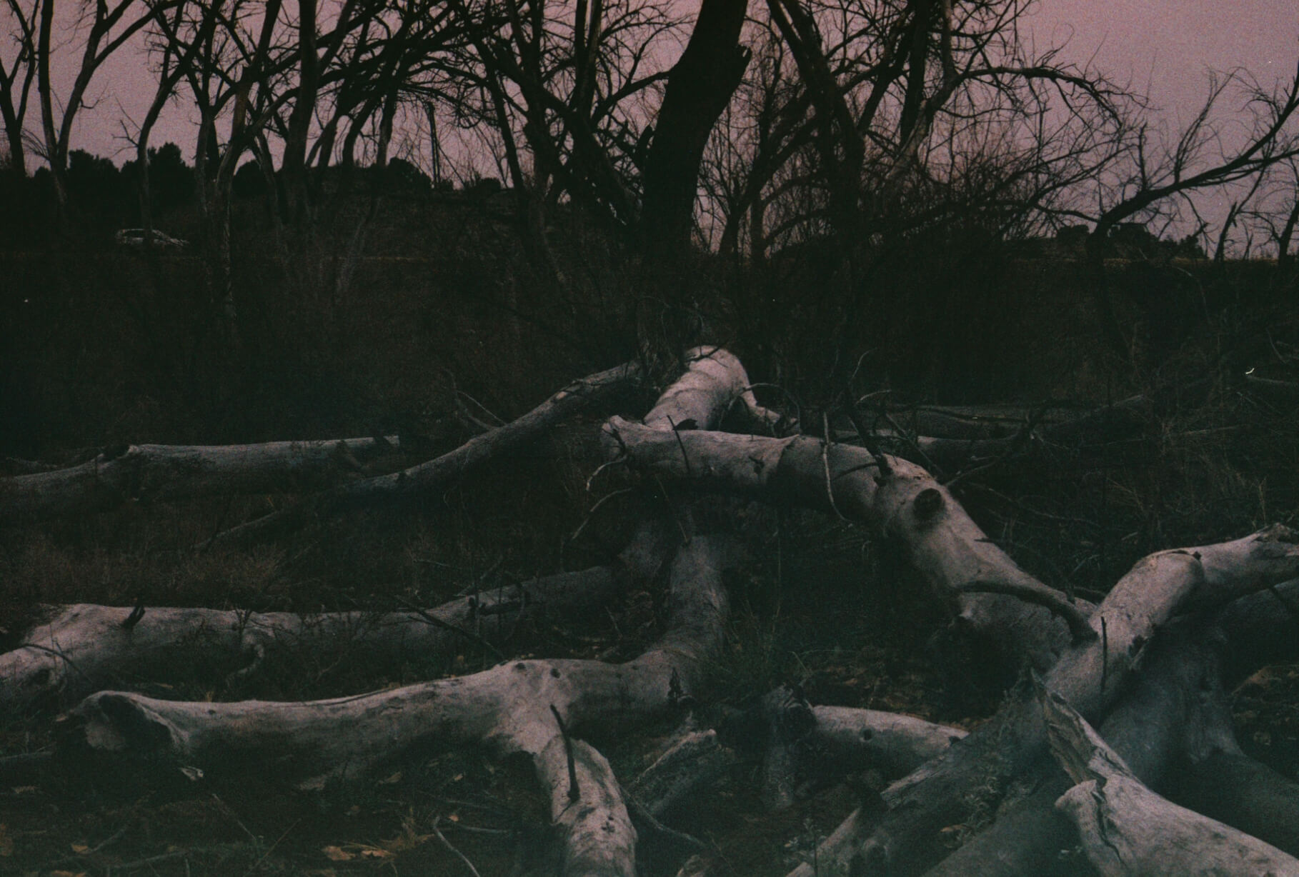a photo of tangled tree roots