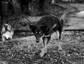 a dog in black and white