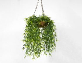 a hanging plant on a white background
