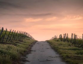 a path at sunset