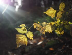 The sun shining on leaves